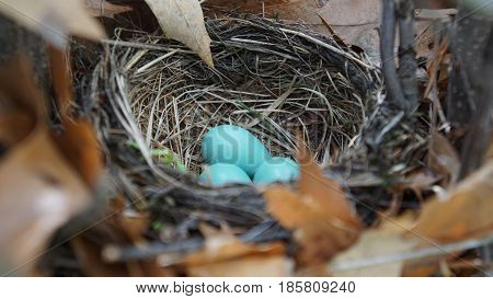 three eggs are showing what is the beginning of life for birds