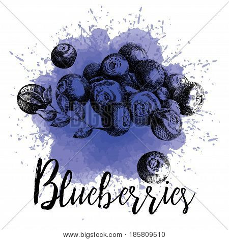 Vector illustration, blueberries in hand-drawn graphics. Forest berry is depicted on a purple watercolor background. Design for packaging blueberry juice, desserts or smoothies