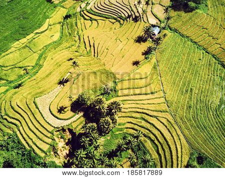 Aerial view of rice terraces in harvest season. Bohol, Philippines, April 2016.