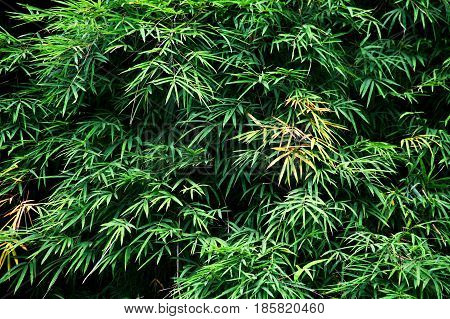Bamboos include some of the fastest-growing plants in the worlddue to a unique rhizome-dependent system.