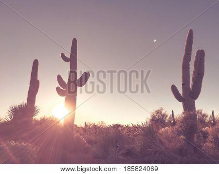 Arizona desert sunrise, saguaro cactus tree