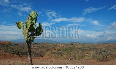 Cactus in the Desierto de la Tatacoa (Tatacoa Desert) in Villavieja, Huila / Colombia