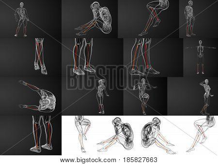 3d rendering illustration of the fibula bone
