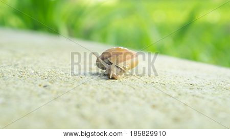 Snail in nature concept - Close up snail walking on cement floor in garden and copy space use for snail and nature content