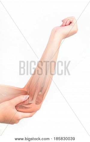 elbow muscle injury white background elbow pain