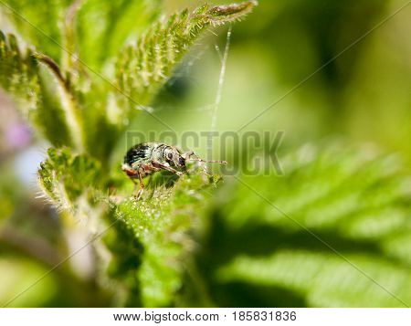 A Green Armored Bug On Top Of A Leaf With Its Eye In Clear Focus Macro Sharp Spring Daytime Light
