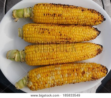 Corn on the cob grilled on the barbecue laid out on a white plate