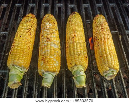 Corn on the cob being grilled on the barbecue