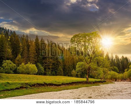 River flows among of a green forest at the foot of the mountain. picturesque nature of rural area in Carpathians at sunset