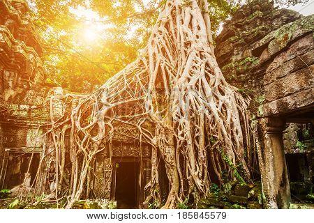 Ta Prohm Temple in Angkor Wat, Siem Reap, Cambodia