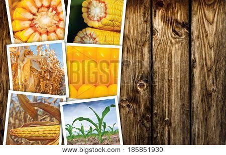 Photo collage of corn maize in agriculture wooden background as copy space