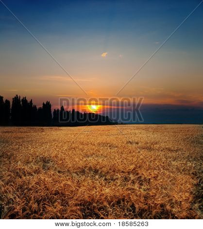 sunset on field at summer