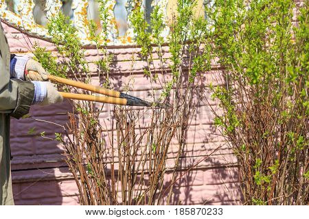 Trimming Of Trees And Bushes Big Scissors In A Garden