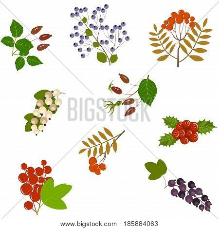 Seamless pattern berries of wild rose, currant, blueberry, holly, viburnum, mountain ash, Isolated on white background, vector illustration