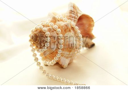 Pearl Wrapped Shell