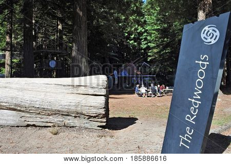 Visitors At Giant Redwood Forests New Zealand