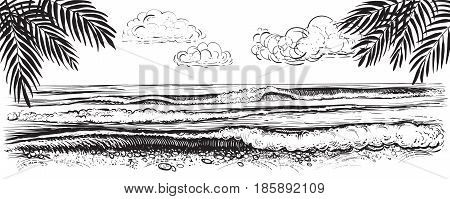 Panoramic beach view. Vector illustration of ocean or sea waves with big crests and foam. Black and white drawing of seaside with palm leaves.