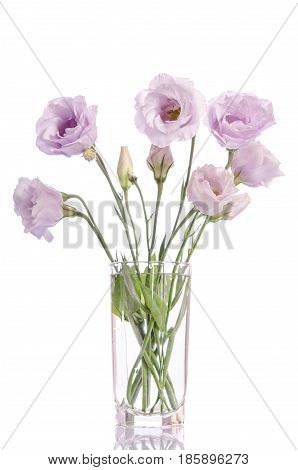 Bunch Of Pale Violet Eustoma Flowers In Glass Vase Isolated On White