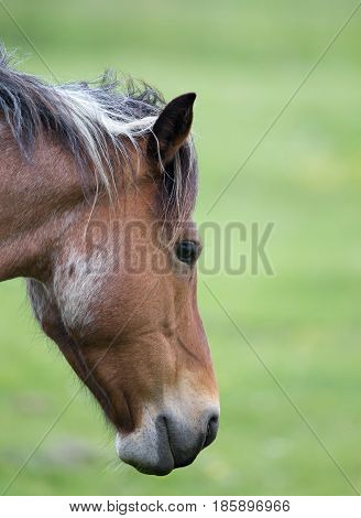Horse Head Against Green Background