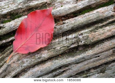 Red Leaf Weathered Wood