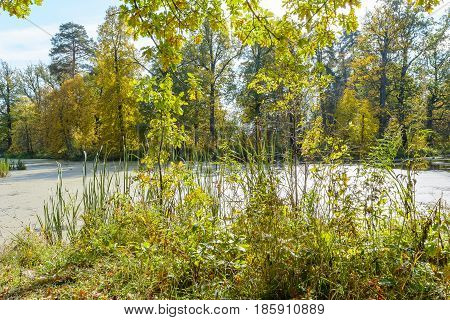 Autumn Early autumn Forest Forest river Forest swamp Grove River Swamp