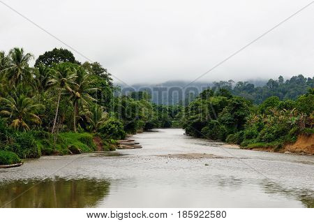 Scenic view of wild tropical jungle on the Borneo island Indonesia. Kalimantan