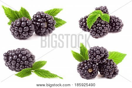 blackberry with leaves isolated on white background. Set or collection.