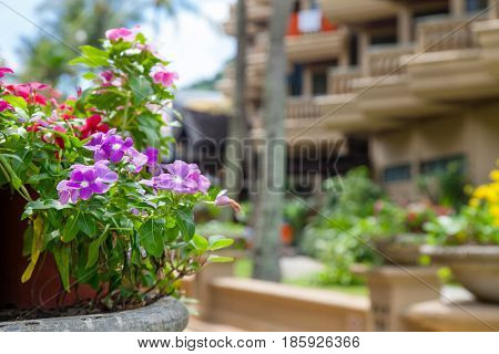Bright sunny travel photo with floral pot on foreground and blurry hotel building on background