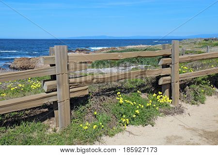 Split-rail fence and yellow flowers of the escaped weed Bermuda buttercup (Oxalis pes-caprae) at Asilomar State Beach on the Monterey Peninsula in Pacific Grove California