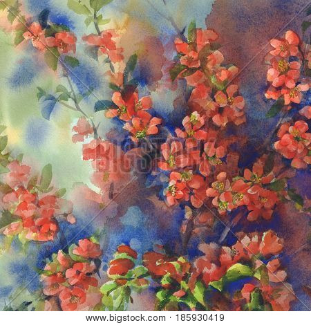 Branches of blooming quince still-life with vases watercolor