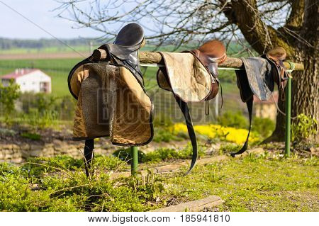 Leather cowboy saddles hanging on the railing. Removable saddles for horses in fresh air. Three saddles hanging on a fence with a forest background.