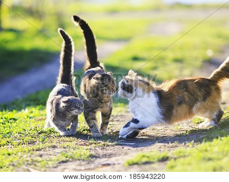 funny cute cats playing in the green grass attacking each other