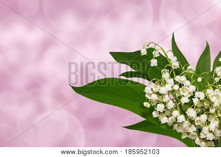 lilies of the valley spring on holiday background
