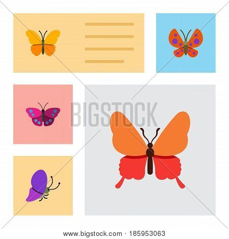 Flat Moth Set Of Summer Insect, Butterfly, Moth And Other Vector Objects. Also Includes Moth, Monarch, Archippus Elements.