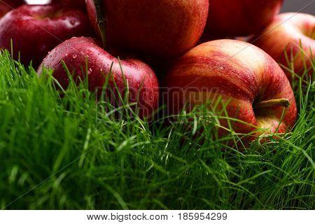 Fallen Fresh Red Apple In The Grass