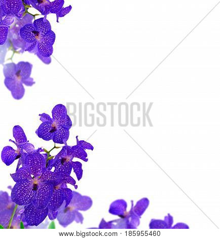 Bunch of fresh blue orchid flowers frame over white background