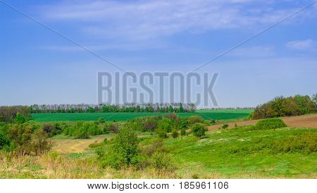 A magical view beautiful expanses of Ukrainian nature green trees and meadows under the blue sky far from the city bustle