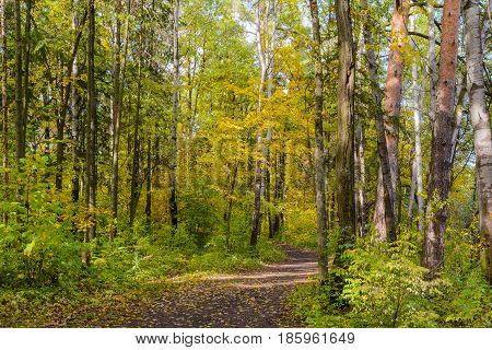 Autumn Early autumn Forest Forest Path Grove Leaves Leaves of the trees Path In The Woods Rays of sunlight Sunlight Sunlight in the branches Trees