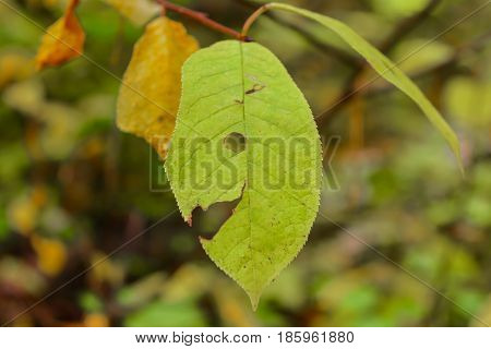 Autumn Early autumn Forest Grove Leaves of the trees Tree Leaf Trees
