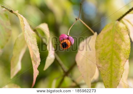 Autumn Berry Early autumn Forest Forest berry Grove Ripe berry Ripe Wild Berry Trees Wild berry