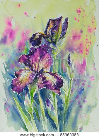 Watarecolors painted iris Provencal in summer garden.