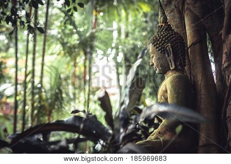 Sitting Buddha mossy stone statue in lush tropical garden among lush tropical foliage in tropical forest as asia travel background with copy space