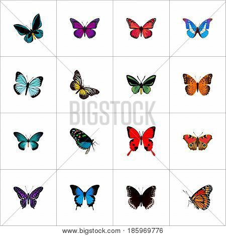 Realistic Hairstreak, Sangaris, Summer Insect And Other Vector Elements. Set Of Moth Realistic Symbols Also Includes Black, Butterfly, Blue Objects.