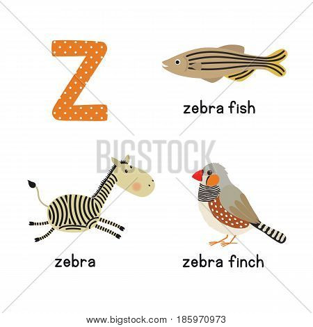 Cute zoo alphabet in vector.Z letter. Funny cartoon animals: zebra, zebrafish, zebrafinch. Alphabet design in a colorful style. vector illustration for children
