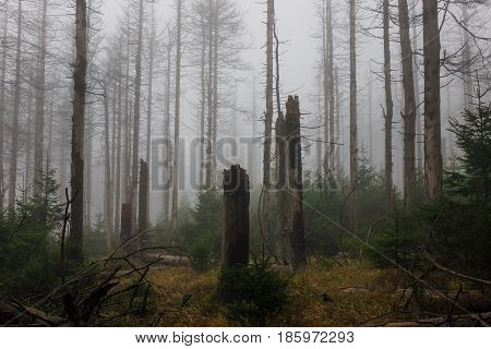 The Old And Autumn Forest In Harz, Germany