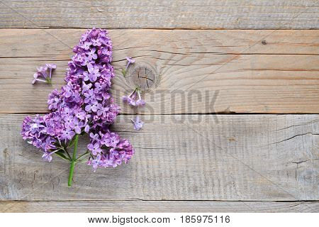Violet lilac flowers on old wooden background