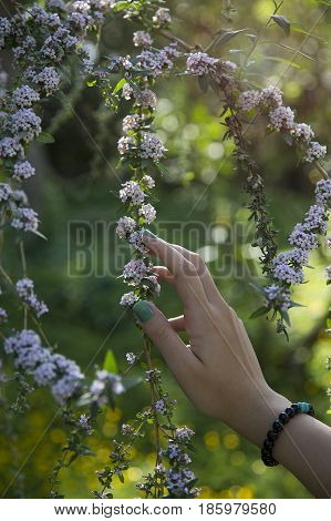 A girl feels flowers with her hand