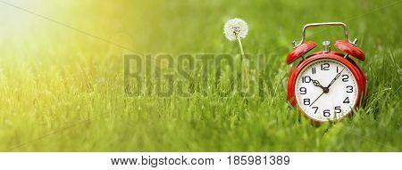 Summer time concept - website banner of a red alarm clock and dandelion flower