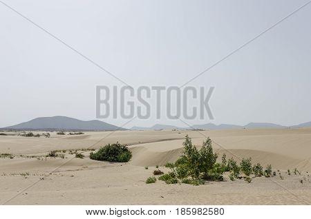 Sand Dune In The Natural-park, Corralejo , Fuerteventura, Canary Islands, Spain