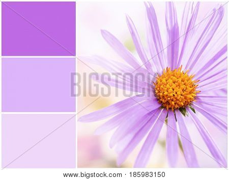 Lilac color matching and beautiful flower, closeup